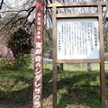 塩尻市天然記念物しだれ桜