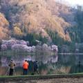 オオヤマ桜撮影スポット