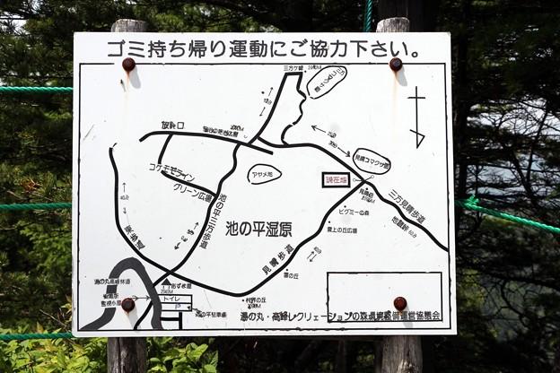 写真: コマクサ案内