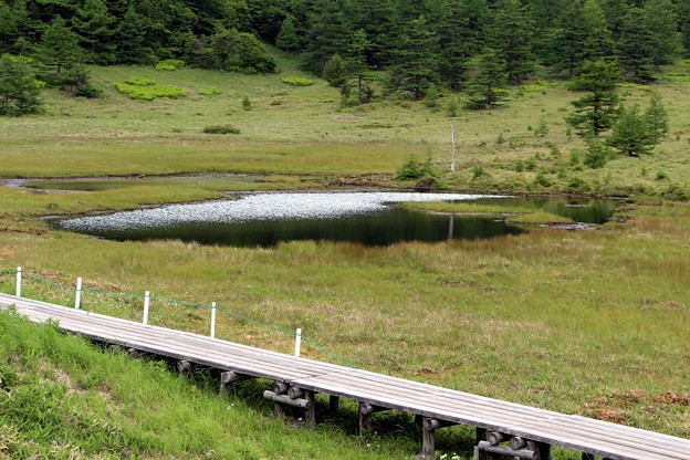 写真: 散策木道の鏡池