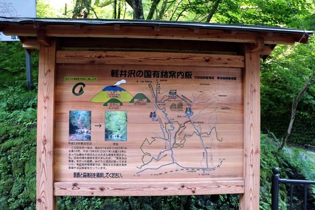 軽井沢国有林案内図