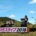 コスモスライブコンサート
