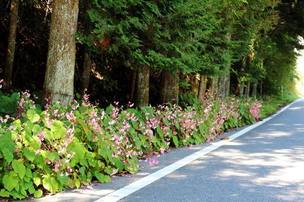 道路沿いに約10mにピンクの花