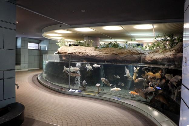 ぎょぎょランド水族館