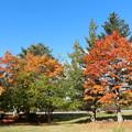 プール平の紅葉