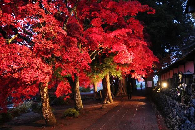 ライトに照らされた楓の紅葉