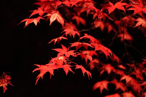 諏訪紅葉三山めぐり見納めの紅葉