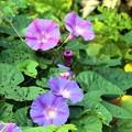 写真: 秋の花の一つ