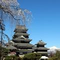 しだれ桜と松本城と雪の北アルプス