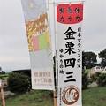 Photos: 「マラソンランナー金栗四三」と「安曇野田んぼアート」幟