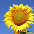 Photos: 陽を浴びて