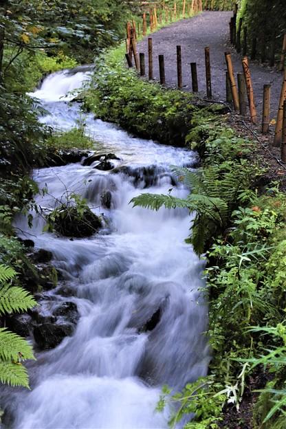 散策路の渓流