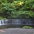 Photos: 白糸の滝