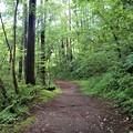 木々の中の遊歩道