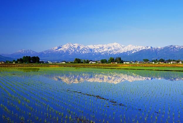 聡明な田園風景