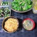 玉子丼&水菜サラダ