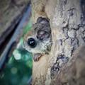 写真: MOMOの瞳は。。