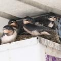 Photos: 巣立ちの日