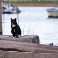 写真: 水辺deタキシード
