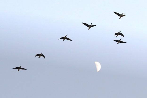 Photos: 月に雁