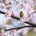 写真: 春・開脚