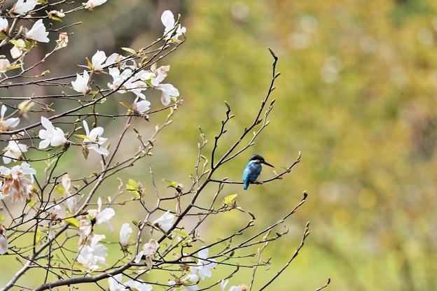 春KAWA