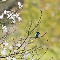 Photos: 春KAWA