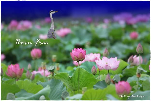 Photos: 盆・FREE