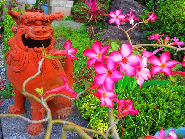 写真: 花見シーサー