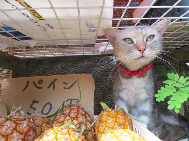 パインを買ったらネコがいた