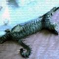 Photos: 050801-【猫写真】伸びてお昼寝中にゃ!