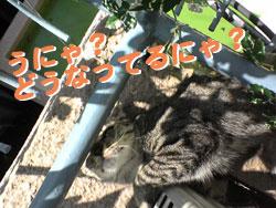 2005/9/12【猫写真】どうにゃってるにゃ?