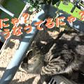 Photos: 2005/9/12【猫写真】どうにゃってるにゃ?