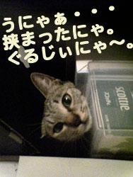 2005/9/16【猫写真】ぐるじぃにゃ~。