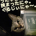 Photos: 2005/9/16【猫写真】ぐるじぃにゃ~。