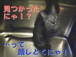 051015-サービス精神旺盛にゃ?!