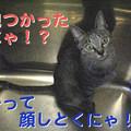 Photos: 051015-サービス精神旺盛にゃ?!