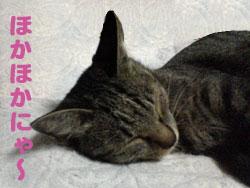 Photos: 051001-【猫写真】ほかほか布団にゃ!