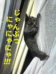 Photos: 051026-2【猫写真】にゃんだべんだ・・・