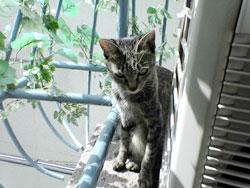 051013-【猫写真】ちんまりぽかぽか