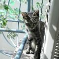Photos: 051013-【猫写真】ちんまりぽかぽか
