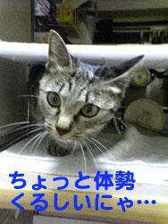 Photos: 051031-【猫写真】体勢苦しいにゃ・・・