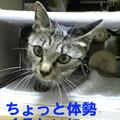 051031-【猫写真】体勢苦しいにゃ・・・