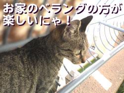 051023-【猫写真】ベランダ一番!