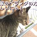 Photos: 051023-【猫写真】ベランダ一番!