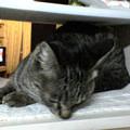 Photos: 051116-1【猫写真】ご馳走にゃ!