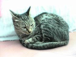 Photos: 051110-【猫写真】眠いにゃ~。
