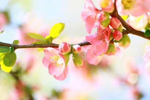 春らんまん~