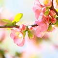 写真: 春らんまん~