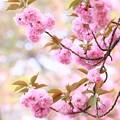 写真: 春を謳歌中~~